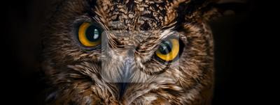 Fototapete Gelbe Augen der gehörnten Eule schließen auf einem dunklen Hintergrund.