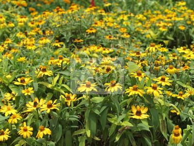 Gelbe Blume Garten
