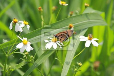 Gelber Schmetterling in der Natur fangen auf grünem Blatt.