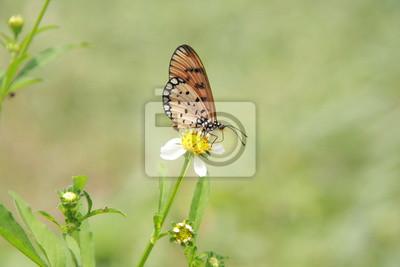 Gelber Schmetterling in der Natur fangen auf weiße Blume.