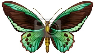 Gemeinsame grünen birdwing