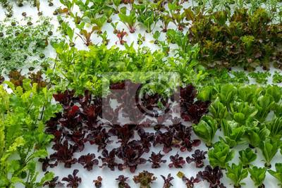 Gemüse In Dekorierten Vertikalen Garten Idee In Der Stadt Fototapete