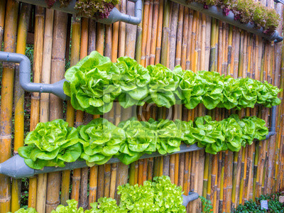 Gemuse In Dekorierten Wand Vertikalen Garten Fototapete