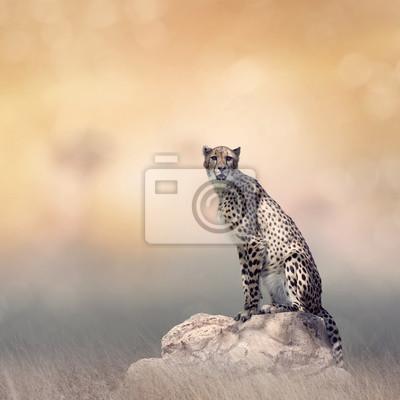Gepard, der auf einem Felsen sitzt