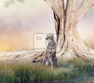 Gepard ruht in der Nähe eines großen Baumes