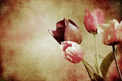 Fototapete Getönte Tulpen strukturiert