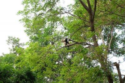 Gibbons hängen am Baum