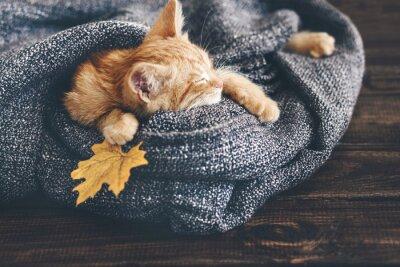 Fototapete Gigner kitten sleeping