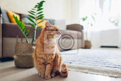 Fototapete Ginger cat sitting on floor in cozy living room. Interior decor