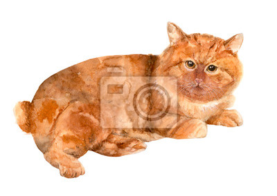 Ginger Katze Kurilian Bobtail Rasse Roter Tabby Liegend Auf
