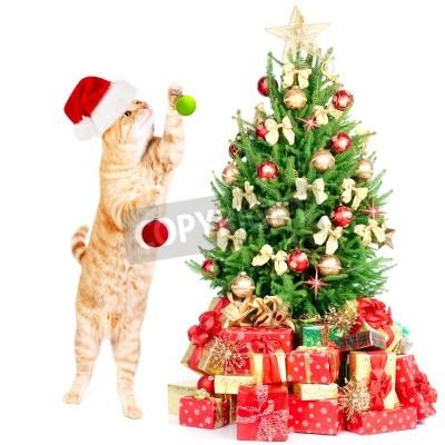 Fototapete Ginger Santa Cat And Christmas Tree Isolated White Background