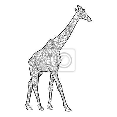 Giraffe Ausmalbilder Für Erwachsene Vektor Fototapete Fototapeten