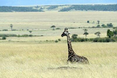 Fototapete Giraffe in der Savanne