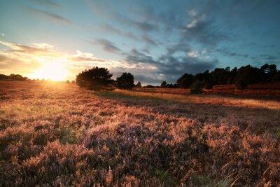 Fototapete Goldener Abend Sonnenlicht über blühende Wiese