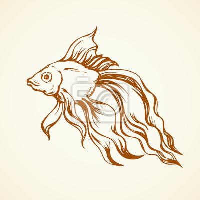 Goldener fisch. vektor-zeichen fototapete • fototapeten schöne ...