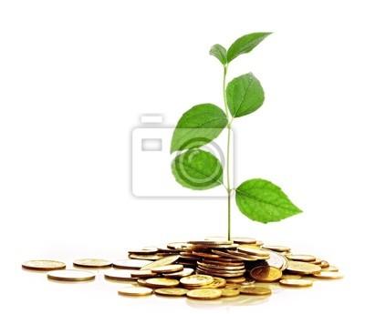Goldmünzen und Pflanze auf weißem Hintergrund.