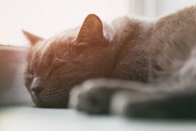 Fototapete Grau Katze schläft auf dem Fenster, Vintage getönten