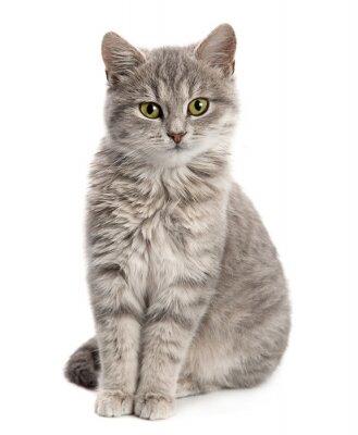 Fototapete Graue Katze sitzt