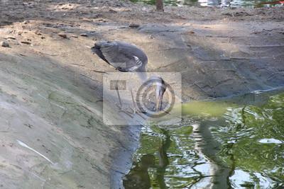 grauer reiher harrier langer schnabel langer hals wilder
