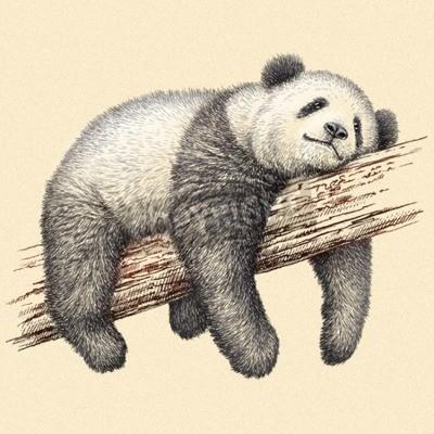 Fototapete Gravieren isolierte panda bär illustration skizze Lineare Kunst