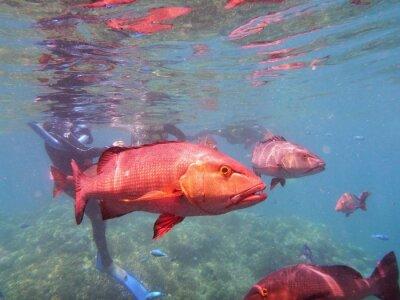 Fototapete Great Barrier Reef Fisch