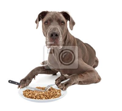 Fototapete Great Dane Dog Eating Food mit Geschirr