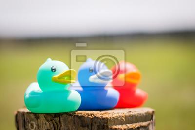 green blue and red rubber ducks fototapete fototapeten. Black Bedroom Furniture Sets. Home Design Ideas