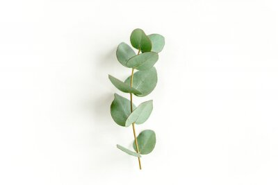 Fototapete Green leaves eucalyptus isolated on white background. Flat lay, top view.