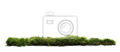 Fototapete Green moss with grass isolated on white background