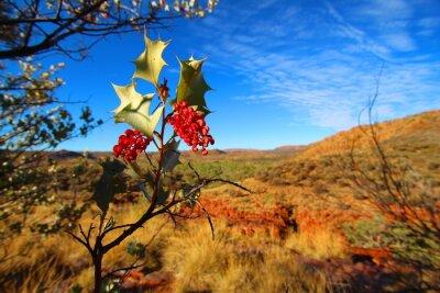 Fototapete Grevillea wickhamii in der Trephina Schlucht, Australien