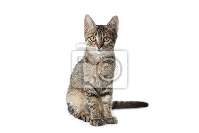 Fototapete Grey tabby cat on white background. Adorable pet