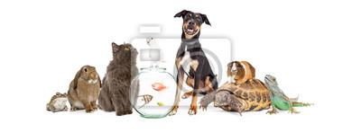 Fototapete Große Gruppe Von Haustieren Tiere Zusammen