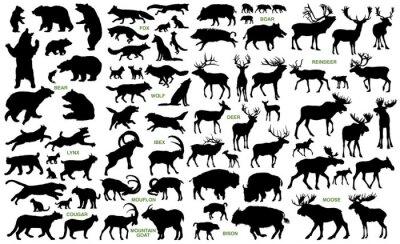 Fototapete Große Säugetiere der nördlichen Länder Vektor Silhouetten Sammlung