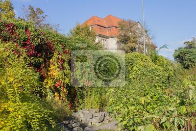 Großer Verwilderter Garten Fototapete Fototapeten Botanischer