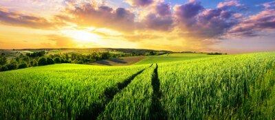 Fototapete Großes grünes Feld bei wunderschönen Sonnenuntergang, eine bunte Panorama-Landschaft
