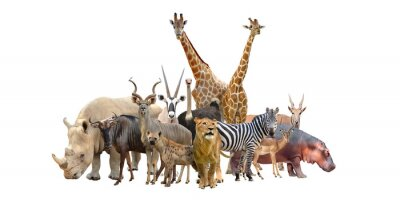 Fototapete group of africa animals