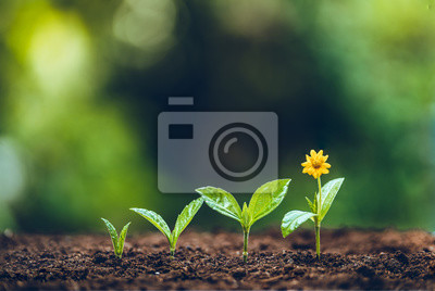 Fototapete Growth tree young plant Natural green background