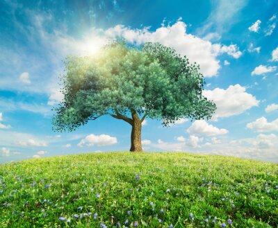 Fototapete Grüne Baum Frühjahr Landschaft