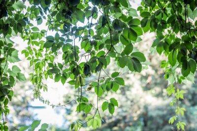 Fototapete grüne Blätter Hintergrund