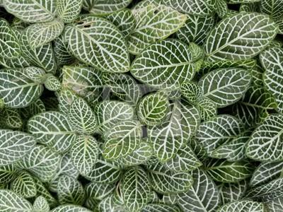 Fototapete Grüne Blätter Mit Weißen Streifen