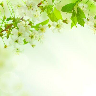 Fototapete Grüne Blätter, schöne Natur-Hintergrund