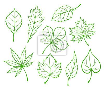 Grüne Blätter Silhouetten