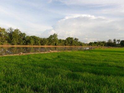 Grüne Felder des bäuerlichen Thailand.
