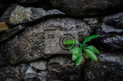 Grüne Pflanze mit Blättern sprießt aus einer Steinwand
