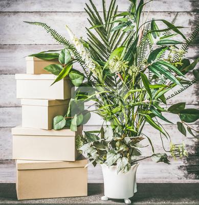 Fototapete Grune Zimmerpflanzen In Den Topfen Auf Tabelle Mit Kartonkasten