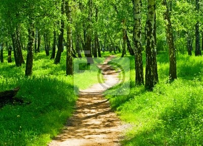 Fototapete grünen Wald