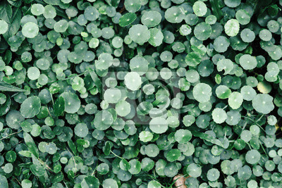 Gruner Boden Pflanzen Hintergrund Fototapete Fototapeten Immergrun