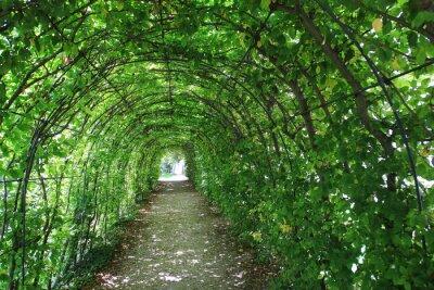 Fototapete Grüner Tunnel im Garten