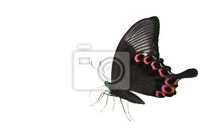 Grüner und schwarzer Schmetterling