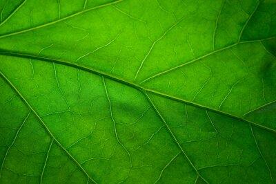 Fototapete Grünes Blatt